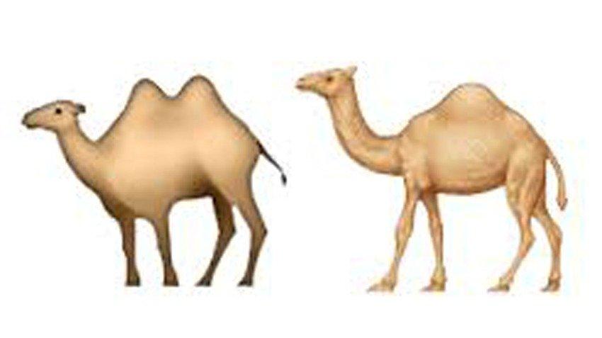 camels emoji
